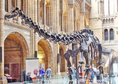 National History Museum Dino Trail